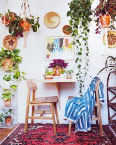 Trang trí cây trồng trong nhà theo phong cách sa mạc đầy hiện đại