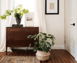 Trồng cây trong nhà mang đến bài học gì
