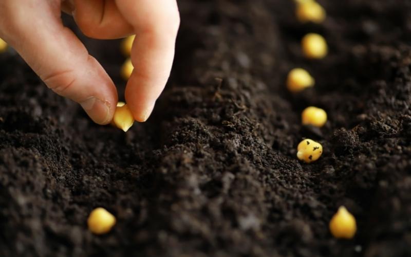 Các loại hạt giống đa dạng