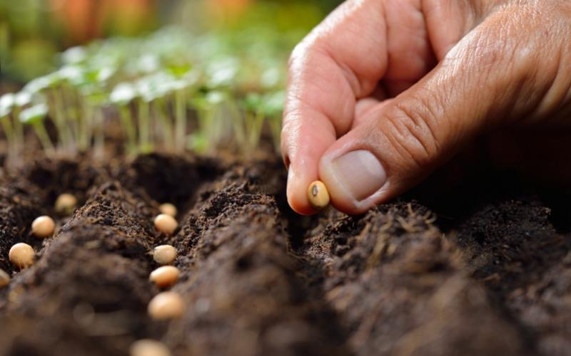 Các loại hạt giống sạch
