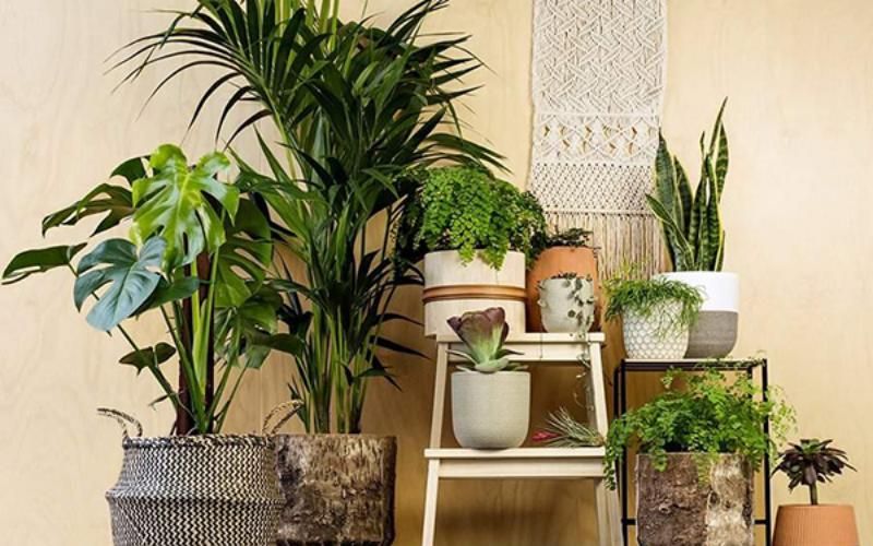 Kiểu dáng chậu trồng cây nội thất phù hợp với chiều cao