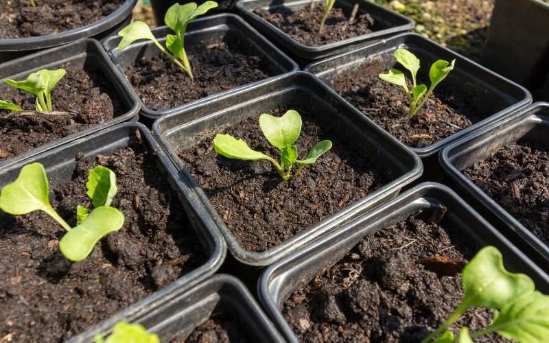 Một số mẫu trồng rau tại nhà thông minh