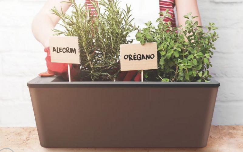 Nguyên lý hoạt động của chậu trồng cây tự tưới thông minh