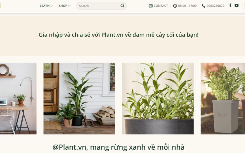 Plant.vn có bán các loại chậu trồng